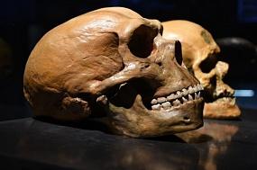 Перемыли косточки: как выглядели неандертальцы