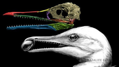 Долгожданный первоначальный клюв нашёлся под самым носом у палеонтологов