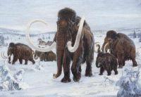 Российские ученые пишут атлас мозга мамонта