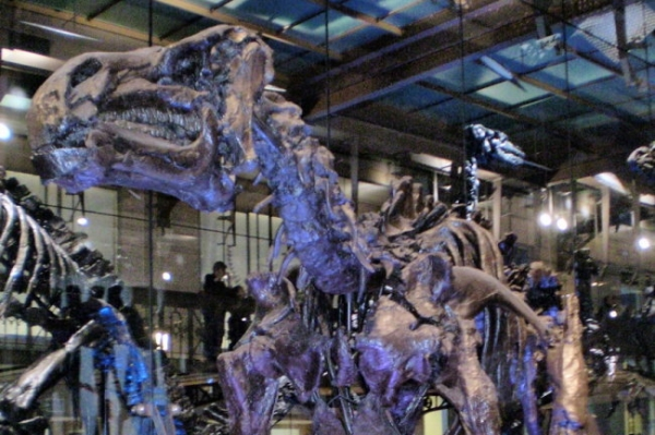 <p>Ученые впервые отыщи окаменелый мозг динозавра</p>