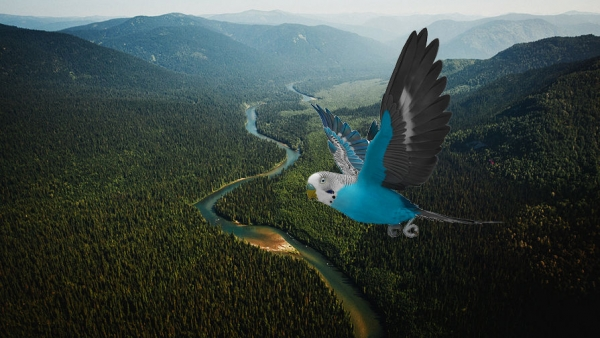 <p>Первоначальный сибирский попугай</p>