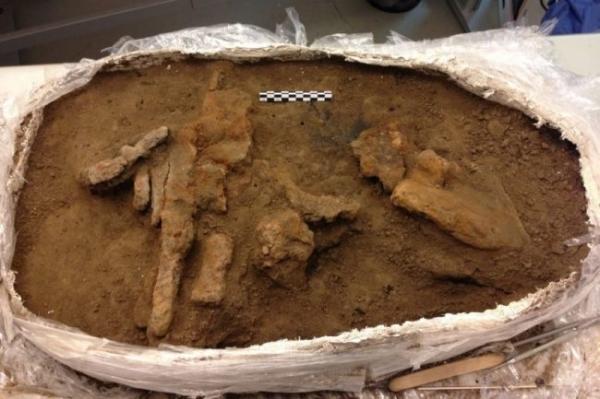 <p>Сверла годом 1000 лет раскопали в Дании</p>
