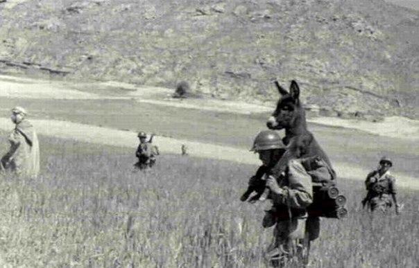 Спасти рядового ослика, 1940-е.