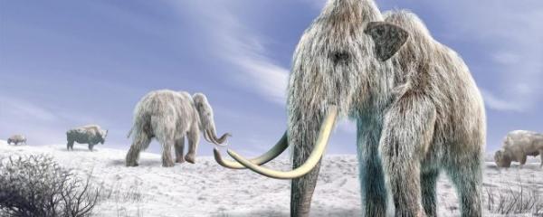 <p>Люд или климат: как мамонты исчезли с лица Земли?</p>