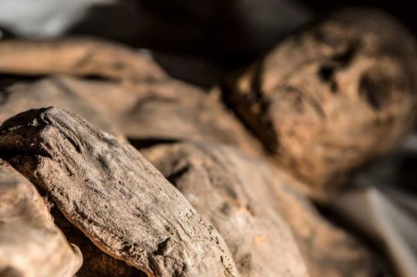 В мумии отыщи смертельный вирус