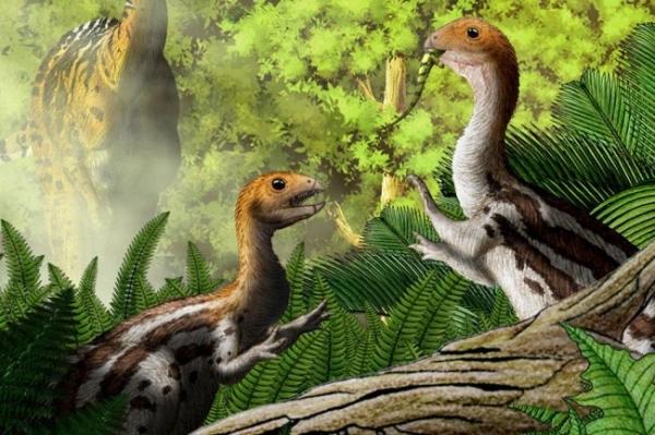 Ученые выяснили, отчего у птиц нет зубов