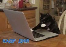 Кадр дня: Мишка?))