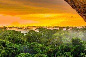 Как Генри Форд желал покорить джунгли Амазонки: Самый амбициозный провалившийся проект XX века