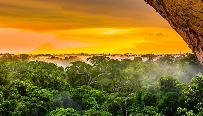 Какие секреты древних народов Амазонки раскрыли археологам космические деревни