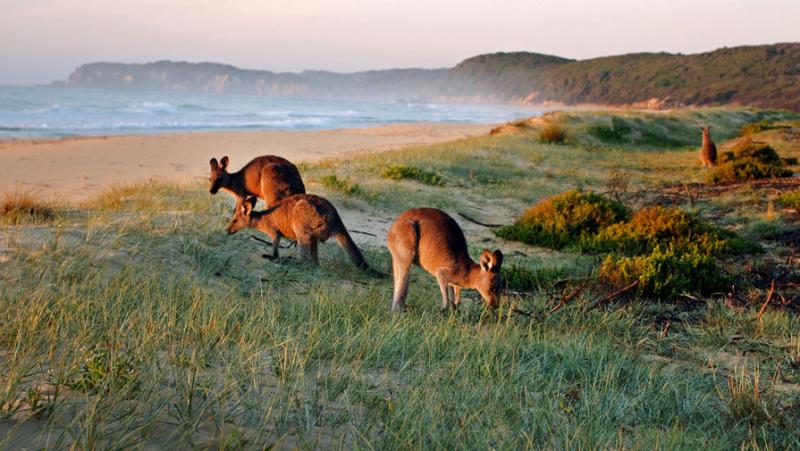 Лазили по деревьям: какими бывальщины древние кенгуру
