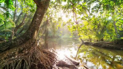 Уложило динозавров, создало тропики: как падение астероида переродило леса Амазонии