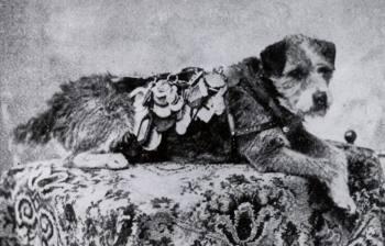 Почтовый пёс Оуни, какой победил более 200 000 км, стал символом верности и человеческого предательства