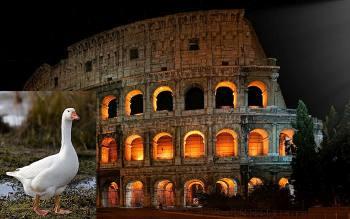 Изумительные причуды Древнего Рима: Почему римляне приносили в жертву собак и почитали гусей